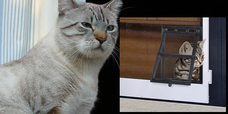 Zanzariera a prova di gatto: come fare se hai un gatto o un cane