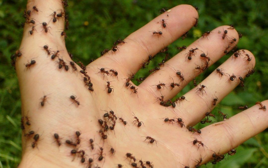 Come eliminare le formiche in casa rimedi