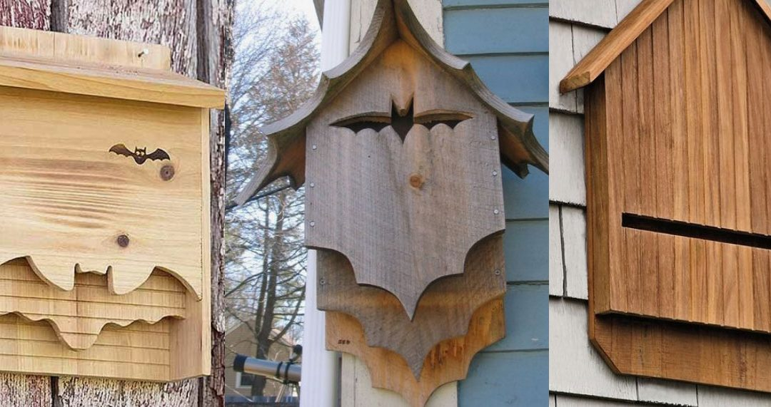 Bat box: come costruirla, posizionarla, e funziona?